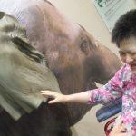 ゾウの耳の模型に触れる利用者さんの写真