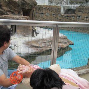 動物園のペンギンの写真