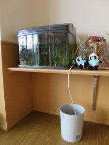 めだかの水槽の写真