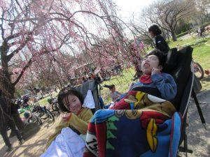 桜満開の公園に利用者さんとスタッフがいる写真
