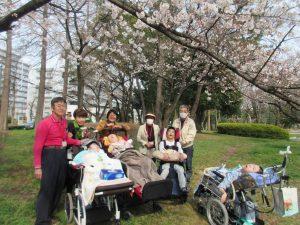 咲き誇る桜をバックに公園でみなさんが並んでいる写真