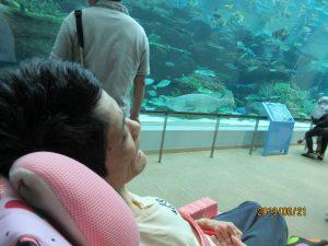 大きな水槽にはきれいな魚が泳ぎ、その前で利用者さんが車イスに座っている写真