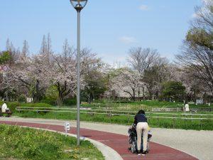 桜が咲いている公園の小道を車イスの利用者さんを職員が押しながら歩いている様子