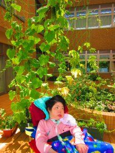 きゅうりやゴーヤの緑の葉っぱが生い茂っている状態の中で、車いすに乗った女性の利用者さんが座っている画像