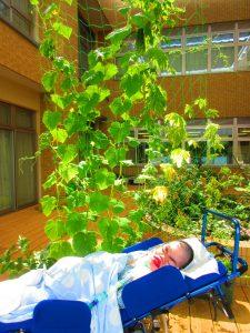 緑の葉っぱが生い茂っている下に車イスの上で眠っている男性の利用者さんがみえる画像