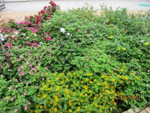 花壇の中の草花がたくさん咲き乱れている様子