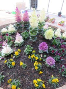 むらきの葉ボタンや白の葉ボタン、黄色のパンジーなど色とりどりのお花が花壇にたくさん咲いている様子