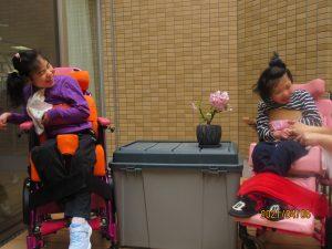二人の女の子の利用者さんが盆栽の桜をはさんで楽しそうにしている様子