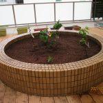 丸い花壇の中に小さな緑の苗が3本植わっている様子