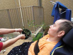 男性の利用者さんに鉢に植え替えた千日紅を見せてあげている様子