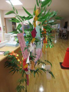 笹の木にたくさんの短冊や飾りがついている様子