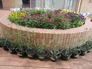 丸い花壇の中に赤、紫、黄色などの花々がキレイに咲き乱れている様子