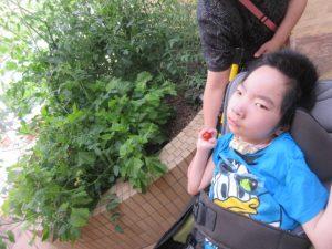 花壇の横で車椅子に座る男児の利用者さんの手に、ミニトマトがのっている様子