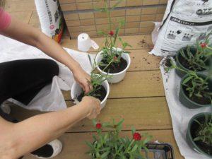 白い植木鉢にスコップで土を入れている様子